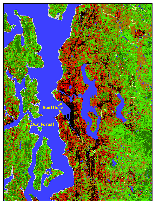 Winter Creek Forest Landsat impervious Surfaces of Puget Sound on pervious surface, hard surface, water surface,